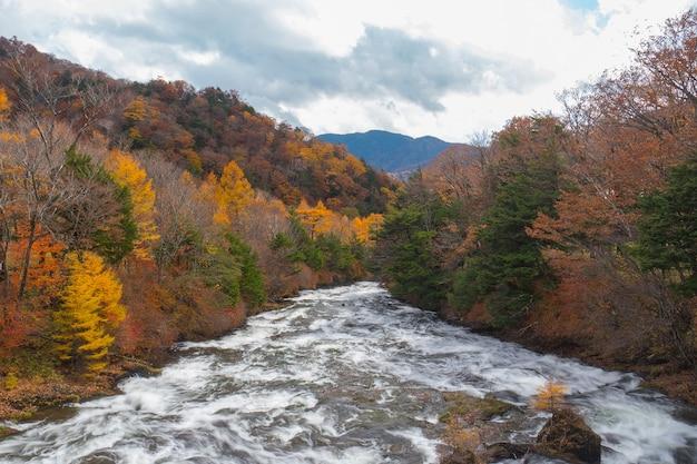 Rio da floresta flui entre a árvore de outono na paisagem colorida da natureza.