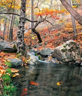 Rio da montanha com uma cachoeira na floresta de outono