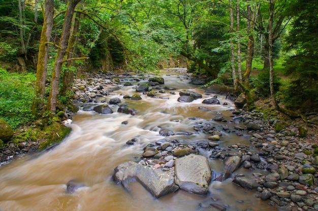 Rio da montanha em uma floresta na geórgia