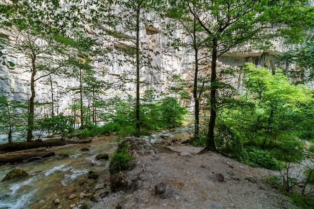 Rio da montanha que flui através da floresta verde na abkhazia