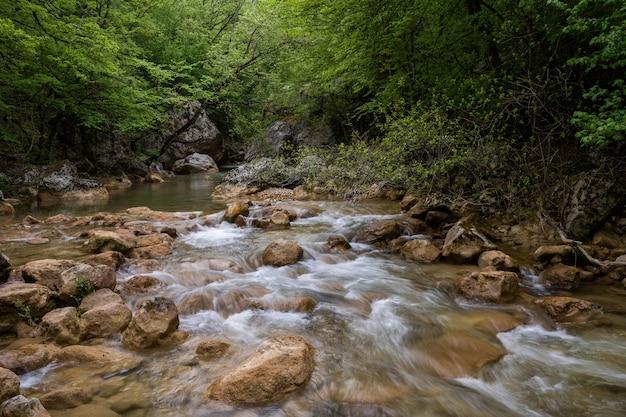 Rio da montanha que flui através da floresta verde