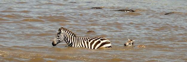 Rio de cruzamento de zebra em serengeti, tanzânia, áfrica