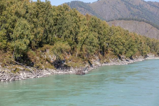 Rio de montanha de fluxo rápido, largo e cheio. a costa é visível no contexto de uma bela floresta. grande rio da montanha katun, cor turquesa, nas montanhas altai, altai republi