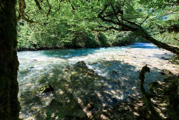 Rio de montanha e árvores de buxo na costa na abecásia