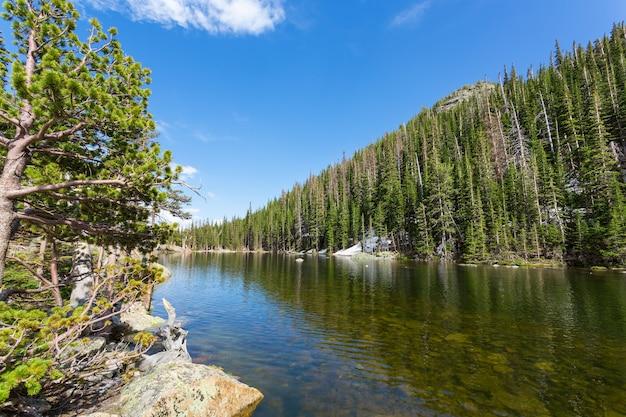 Rio de montanha e floresta perene de cada lado