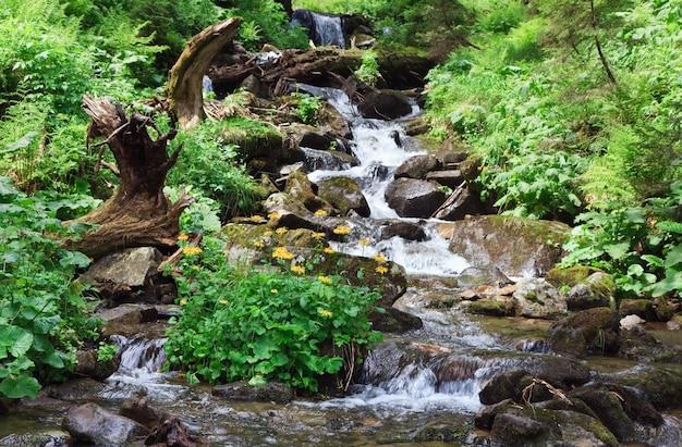 Rio de montanha em floresta de verão com arbusto de flor amarela (cárpatos, ucrânia)