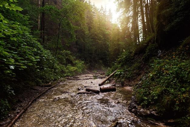 Rio de montanha paisagem sucha bela canyon paraíso eslovaco eslováquia