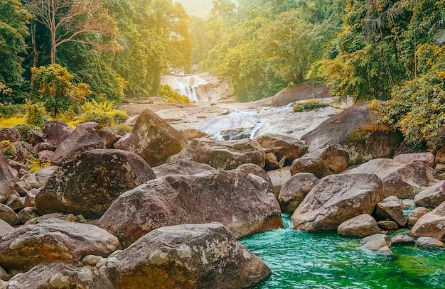 Rio de pedra em folha de árvore multi cor na floresta