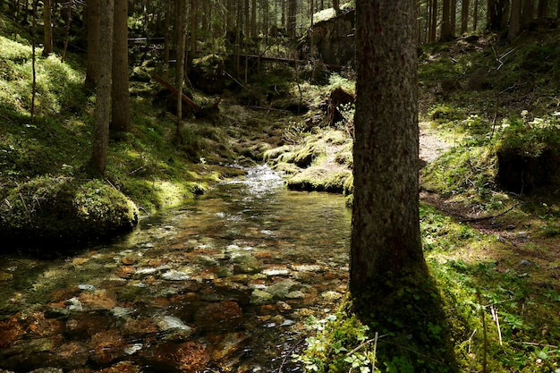 Rio estreito em uma floresta cercada por belas árvores verdes