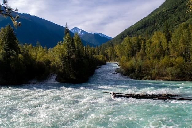 Rio fluindo bela montanha. rio kucherla azul no parque nacional belukha, montanhas altai, sibéria, rússia