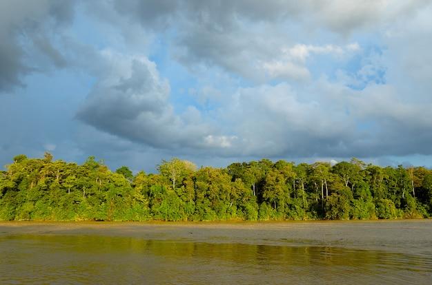 Rio kinabatangan, malásia, floresta tropical da ilha de bornéu