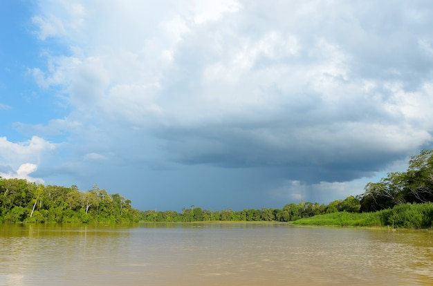 Rio kinabatangan, natureza da malásia, floresta tropical e selva da ilha de bornéu