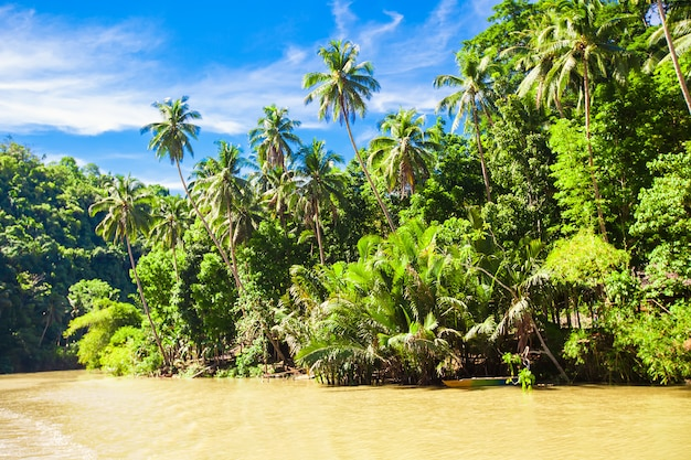 Rio loboc e selva na ilha bohol nas filipinas