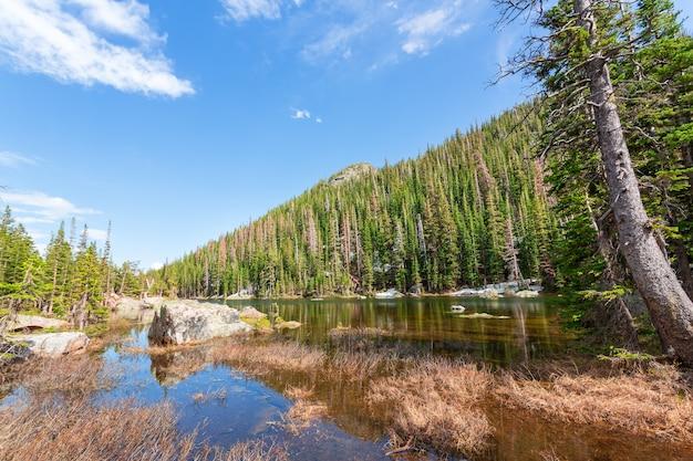 Rio montanhoso e floresta perene em cada lado em estes park, colorado, eua