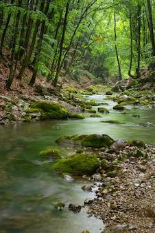 Rio nas profundezas da floresta de montanha