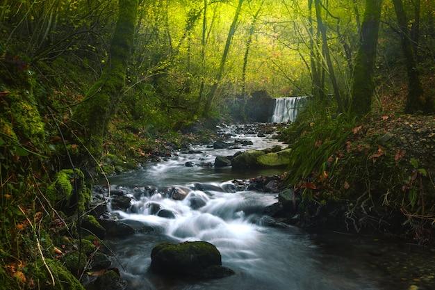 Rio pela floresta no parque natural aiako harriak, país basco