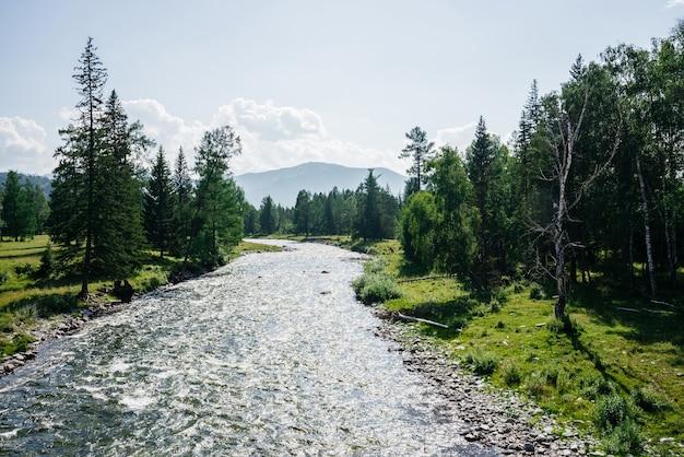 Rio pequeno de bela montanha com águas claras na floresta entre a rica flora em dia ensolarado. paisagem maravilhosa para riacho de montanha com água transparente. cenário colorido com agradável frescor florestal.