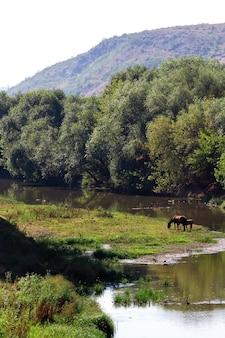 Rio que corre com árvores exuberantes ao lado, dois cavalos pastando, colina ao fundo na moldávia