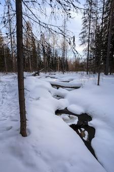 Rio selvagem em uma floresta coberta de neve