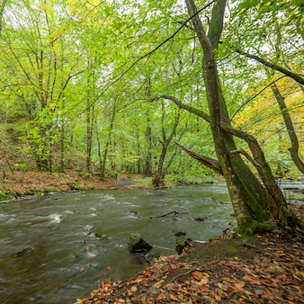 Rio tempestuoso fluindo pela floresta de primavera