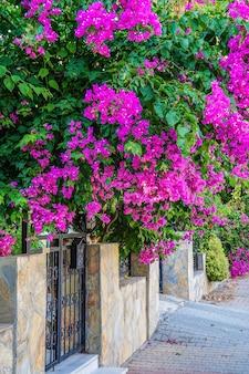 Riviera turística com plantas floridas, sol e hotéis ao fundo de montanhas arborizadas