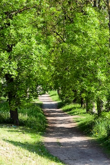 Road, localizada na zona rural na temporada de primavera