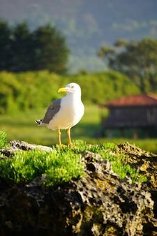 Rocha com nidificação de gaivotas perto de uma praia na espanha