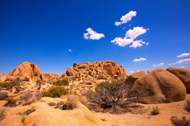 Rocha do crânio no parque nacional de árvore de joshua mohave califórnia