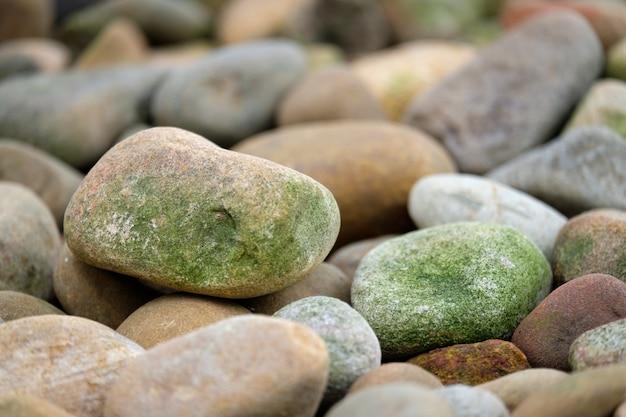 Rochas circulares com esporos verdes