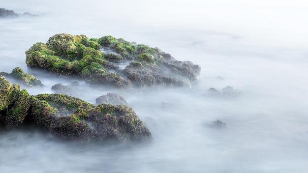 Rochas cobertas de algas marinhas na costa