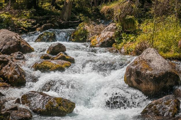Rochas de escalada e grandes pedras fluem contra a vegetação fresca e plantas