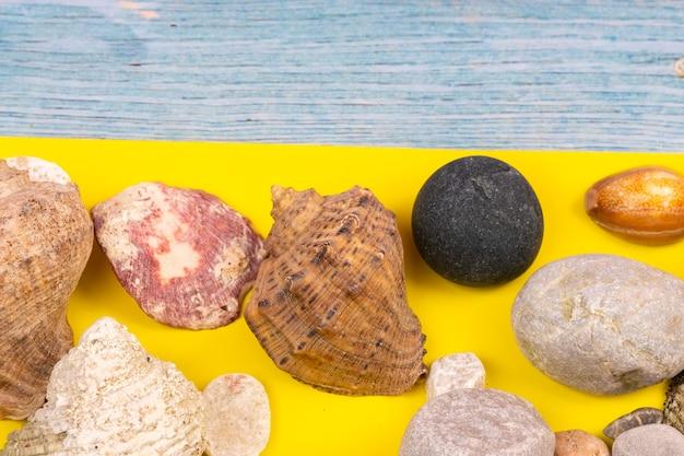 Rochas e conchas no conceito de praia