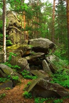 Rochas e troncos de árvores na floresta