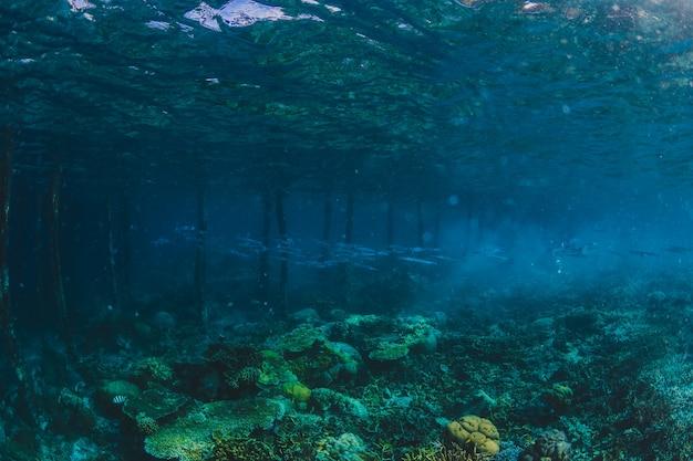 Rocky seabed com bolhas de ar de mergulhador, cena natural, med