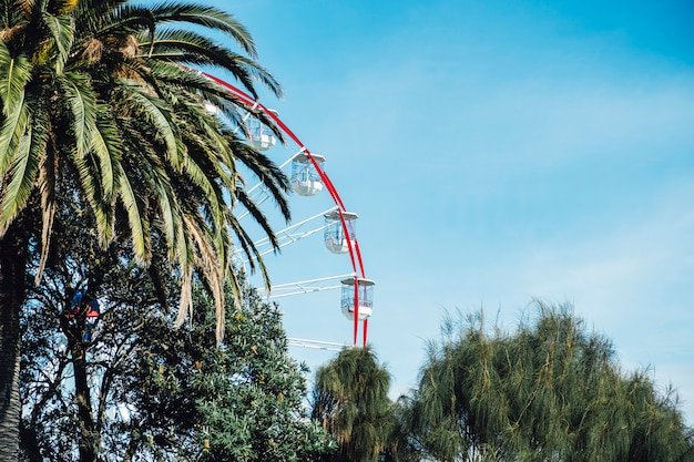 Roda gigante e árvore