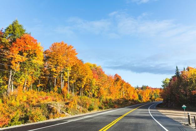 Rodovia americana através da madeira no outono