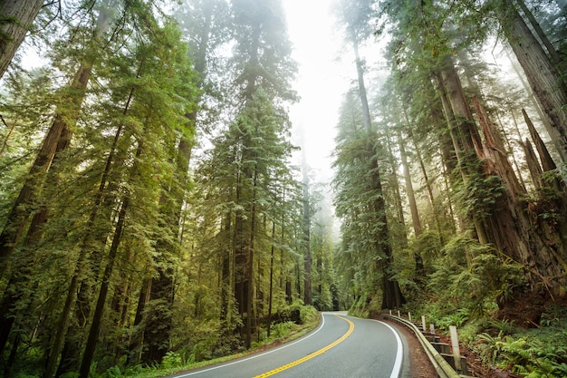 Rodovia redwood no norte da califórnia, estados unidos