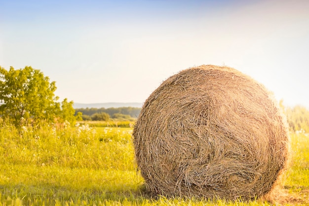 Rolo de feno em um close do campo sob os raios de sol