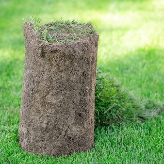 Rolo de grama de gramado de esportes no quintal. criação de paisagismo ou campo de golfe. close-up, foco seletivo.