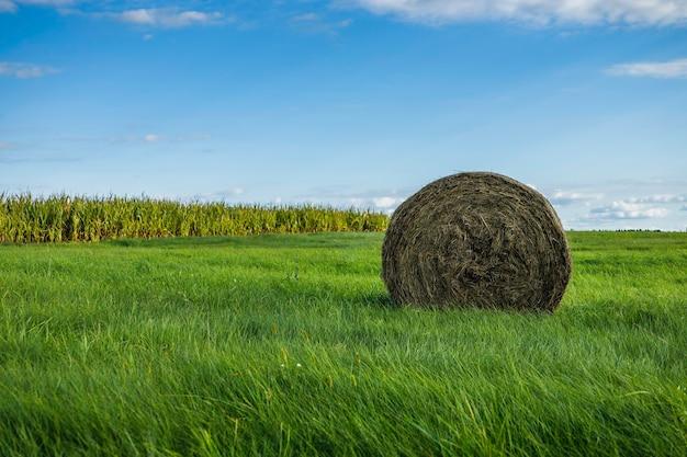 Rolo de palha sob um céu azul nublado em uma paisagem agrícola