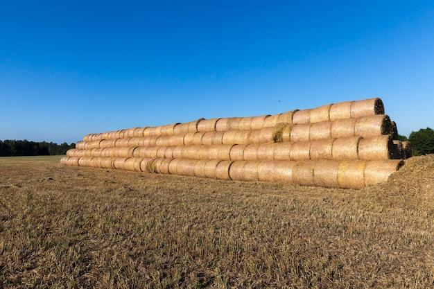 Rolos de palha de trigo cilíndricos empilhados para armazenamento conveniente