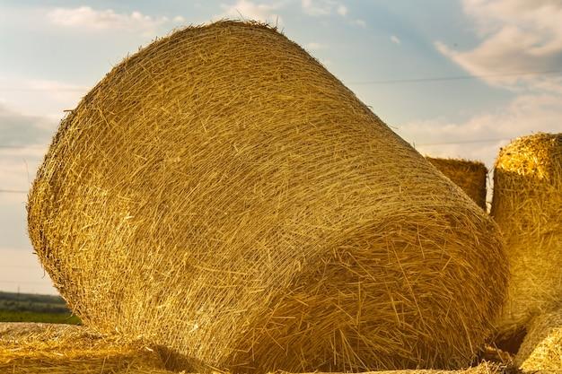 Rolos de palha dourada em um campo de trigo ao pôr do sol, embalagem de feno e tecnologia de armazenamento na agricultura