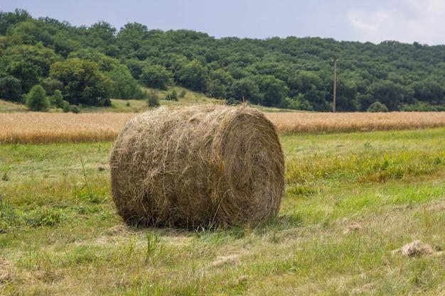 Rolos de palheiro no campo, após a colheita de trigo.
