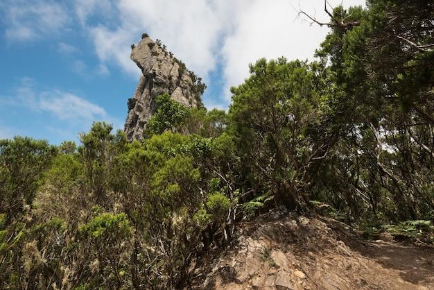 Roque anambro na floresta tropical de anaga, ilha de tenerife, ilhas canárias, espanha.