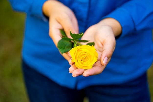 Rosa amarela em mãos femininas