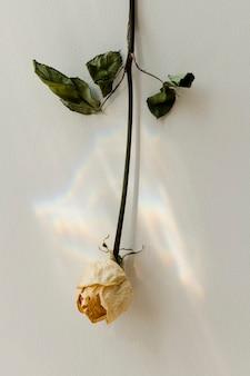 Rosa branca de cabeça para baixo em uma parede