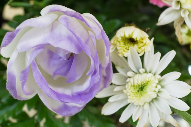 Rosa branca - flor romântica