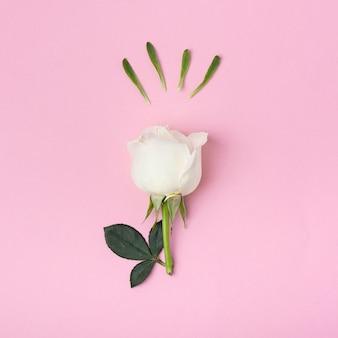 Rosa branca fofa de close-up em fundo rosa