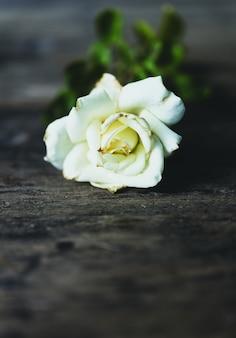 Rosa branca seca bonita no fundo de madeira do grunge