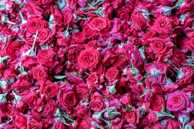 Rosa colorida, flores vermelhas à venda para oferecer a deus durante a adoração na pequena índia, mercado de rua, cingapura, close-up, vista superior. fundo de rosas vermelhas